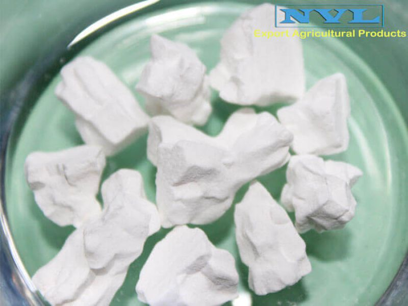 Powder arrowroot (T2)
